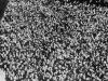 benito-mussolini-with-crowd